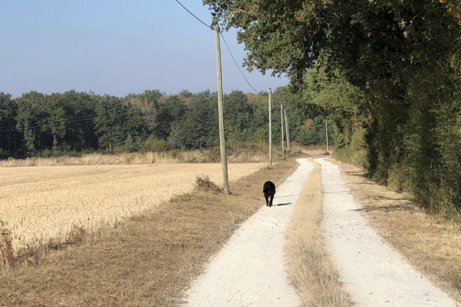 Jaeger taking a walk